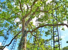 Climb into the treetops with this French ladder tree art installation