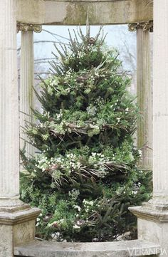 Christmas tree garlanded with grevellea and cedar boughs, Queen Anne's lace, chamomile, and bird's nests.