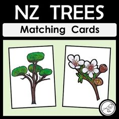 New Zealand Trees Matching Cards School Resources, Classroom Resources, Teaching Resources, Classroom Ideas, Playing Games, Games To Play, Picture Tree, Name Pictures, Kiwiana