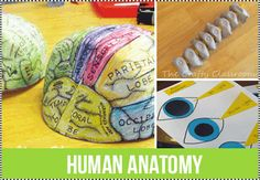 Human Anatomy Projects for Homeschool