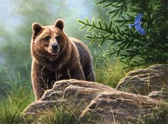 Abraham Hunter Bear Paintings, Wildlife Paintings, Wildlife Art, Bear Pictures, Animal Pictures, Art Timeline, Teddy Bear Cartoon, Painter Artist, Painting Workshop