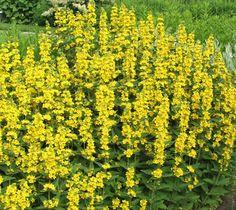 Tarha-alpi Olympus Digital Camera, Herbs, Park, World, Flowers, Plants, Gardens, Animals, Animales