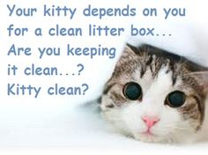 Is your litter box this clean?