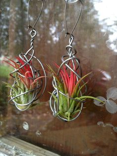 NEW DESIGN Pair of Living Air Plant Earrings by kambra on Etsy