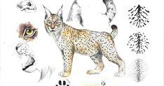 ILLUSTRACIENCIA: Estudio sobre el lince ibérico - Celia Leo Lynx, Natural World, Moose Art, Cartoon, Andalucia, Drawings, Animals, Blanket, Button