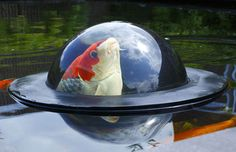 Floating Dome Lets Fish Take A Peek Of The World Above Water Level
