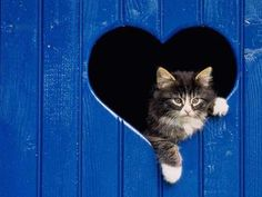 """Im already hearing the sighing n""""awwwwwwwwww"""" you are going to make when you see this."""