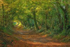 Elven forest kingdom ☼ Sussex