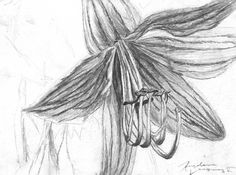 """...This is a photograph-turned-drawing I took of my neighbour's flowers when I went into their property without realizing, lol🙈 """"Looks Like A Lily"""" · 8 x 11  #highschool #drawing #pencil #art #lily #trespassing #oops #monday #belleville #bellevilleontario #angelene ·"""