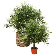Brucs Olive Ball Artifical Plant (260 CAD) ❤ liked on Polyvore featuring green