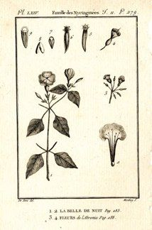 "buffon botanical french 1775 engraving 4 x 6""  $25 - 08"