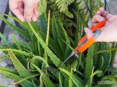 Comment lisser les cheveux secs -- via fr.wikihow.com