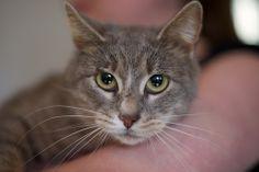 Norma Goathouse Refuge cat