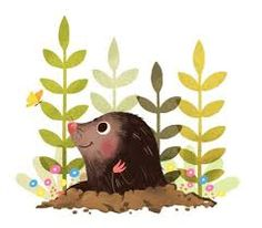 Image result for drawings of moles animal