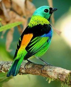 Beautiful Colourful Bird.