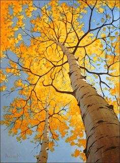 aspen tree  My very favorite fall sight.