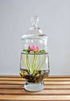 Mini Lotus Water Lily Terrarium in Recycled Glass | por missmossgifts