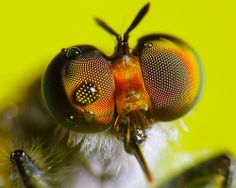 Heavenly Eyes by VicWasHere ::, via Flickr