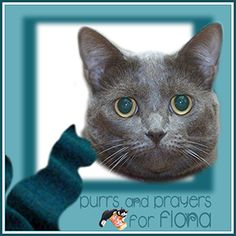 Fiona continues to need purrs, prayers and POTP as she receives treatment for CKD.