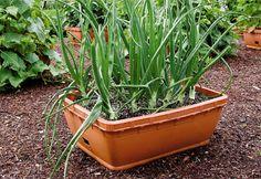 pot depths for veggies...