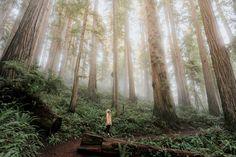 Winter California Road Trip – Redwoods & Yosemite