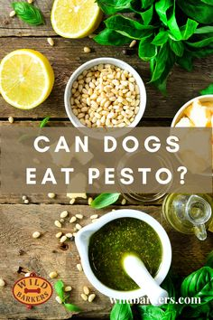 Can dogs eat pesto? No, although pesto is primarily made up of basil, which is safe for dogs, it contains garlic, which is known to be toxic, as well as oil and cheese which can cause health issues, such as, diarrhea, vomiting, and obesity. What should I do if my dog ate pesto? 1. First, check the ingredients list. Garlic is the ingredient to look out for.  2. Determine how much was eaten and the quantity of garlic ingested. 3. Contact your veterinarian; they will be able to advise if the… Can Dogs Eat, Dog Eating, Pesto, Basil, Cantaloupe, Garlic, Wellness, Cheese, Canning