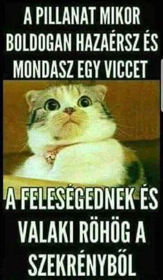 Really Funny, Funny Cute, Animal Memes, Funny Animals, Funny Images, Funny Pictures, Funny Jokes, Hilarious, Percy Jackson Memes