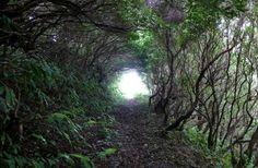 Alojamentos/moradias , para férias Trilhos , Ilhas dos Açores Ilha São Jorge Fajã dos Vimes – Lourais – Fajã de São João PR3SJO