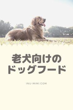 これしらないんですか? Dog Food Recipes, Dogs, Movie Posters, Pet Dogs, Dog Recipes, Doggies, Dog, Film Posters, Billboard