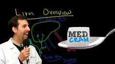 liver anatomy - YouTube