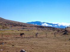http://milagrosfernandezasesoriadeinversion.blogspot.com/2014/01/ano-nuevo-chino-2014-ano-del-caballo.html