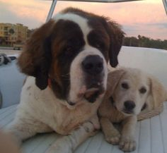 Here is a picture of Cassidy & Luke on the boat. Luke came into our life unexpectedly. He came in as a foster from FARR a scared little puppy. It only took a few days for him to get into our hearts, and we knew he was there to stay.