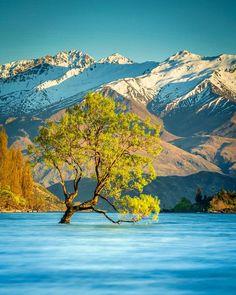 "That Wanaka tree by Meghan Maloney | New Zealand (@meghanmaloneyphotography) on Instagram: ""New Zealand's superstar tree. Given worldwide fame by Instagram, #thatwanakatree #NZ_lakes #lakewanaka_NZ"