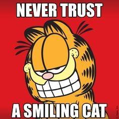 Never trust a smiling cat