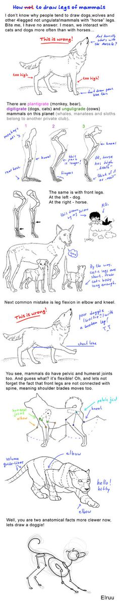 How to draw legs of mammals by Elruu on deviantART