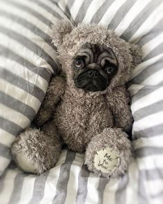 Just click the link to learn more pug puppies for adoption. Click the link for more. See our exciting images. Cute Pugs, Cute Dogs And Puppies, Baby Puppies, Funny Puppies, Doggies, Cute Baby Animals, Funny Animals, Funny Dog Fails, Pug Wallpaper