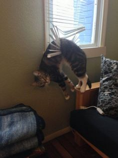 Human, I require your assistance!
