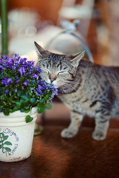 "Kitten and purple flowers.  Support ""Southern California Cat Adoption Tails"" www.catadoptiontails.org."