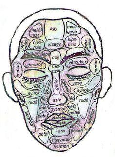 szervek vetülete az arcon