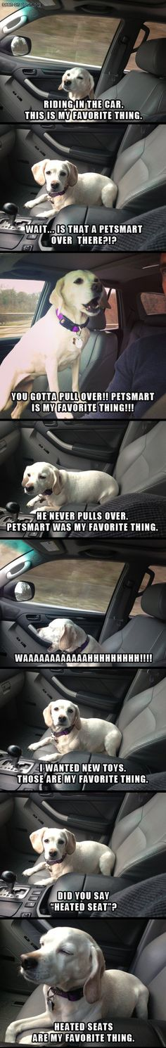 Looks like my dog! Lol! That makes it even more funny.
