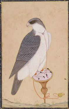 A falcon on a perch, India, Mughal, late 18th century gouache heightened with gold on paper, with outer album page borders of blue and red flecked with gold