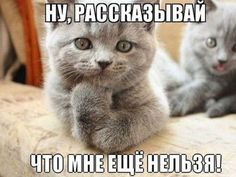 правила умной кошки - Самое интересное в блогах