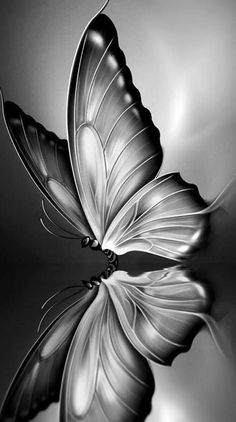 Search free butterfly Ringtones and Wallpapers on Zedge and personalize your phone to suit you. Start your search now and free your phone Butterfly Drawing, Butterfly Painting, Butterfly Wallpaper, Pencil Art Drawings, Art Drawings Sketches, Animal Drawings, Cute Wallpapers, Wallpaper Backgrounds, Iphone Wallpaper