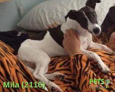 Dog, Pets, Diy Dog, Doggies, Dogs, Animals And Pets