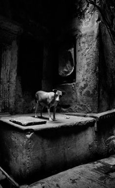 Anita Andrzejewska Black White Photos, Black And White, Amazing Photography, White Photography, Female Photographers, Macabre, Light In The Dark, Graphic Illustration, Fine Art