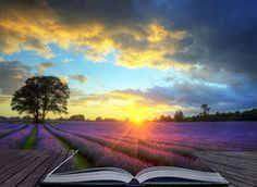 Photographic Print: Creative Concept Image of Atmospheric Sunset Lavender Fields in Pages of Magic Book by Veneratio : Start Where You Are, Chiropractic Care, Holistic Medicine, Magic Book, Lavender Fields, Walk This Way, Jesus Saves, New Age, 21st Century