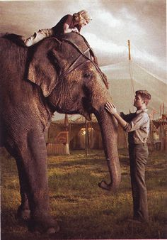 Water for Elephants (film) produced by Flashpoint Entertainment and Fox 2000 Pictures was released in theaters on April 22, 2011. The film was directed by Francis Lawrence, and starred Robert Pattinson as Jacob Jankowski, Reese Witherspoon as Marlena, and Christoph Waltz as August. Hal Holbrook played the older Jacob Jankowski.
