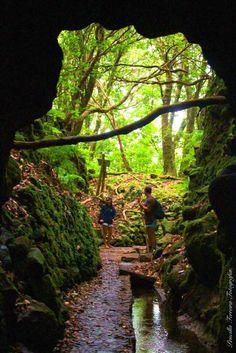Levada do Caldeirão Verde - Ilha da Madeira, Portugal