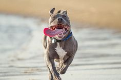 Cute Overload: 10 Smiling Pups to Perk Up Your Day via Brit + Co.     Dog breath blog