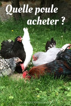 Potager Garden, Raising Chickens, Permaculture, Horticulture, Vegetable Garden, Poultry, Animals And Pets, Farmer, Rooster